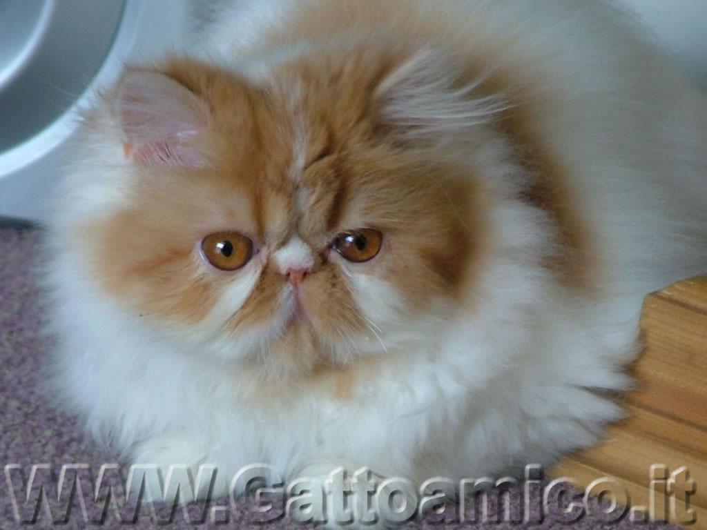 Casa immobiliare accessori cuccia gatto ikea - Cuccia per gatti ikea ...