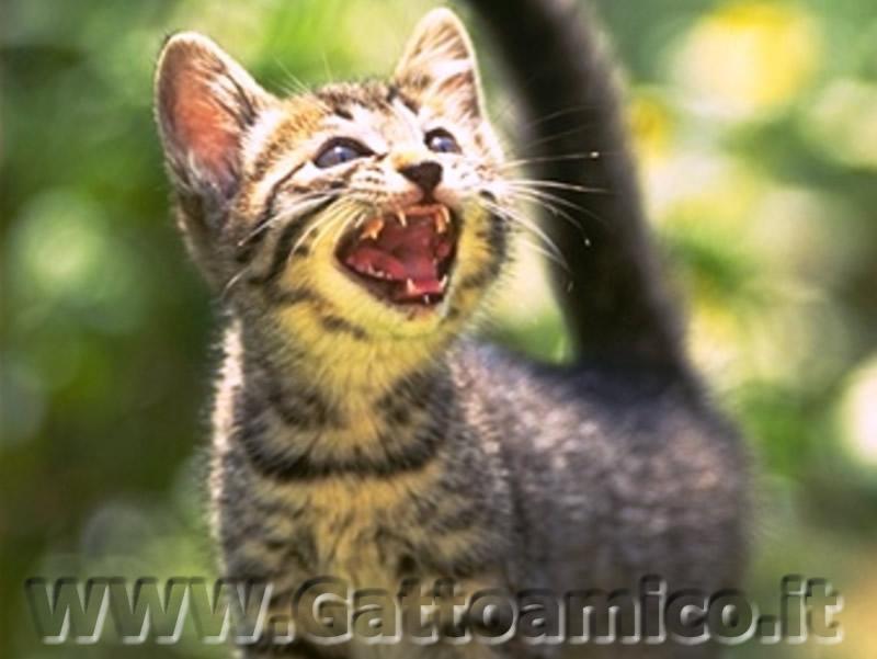 ma lui non è arrabbiato micetto!!! dans una bella rosa gatto%20aggressivo%20800