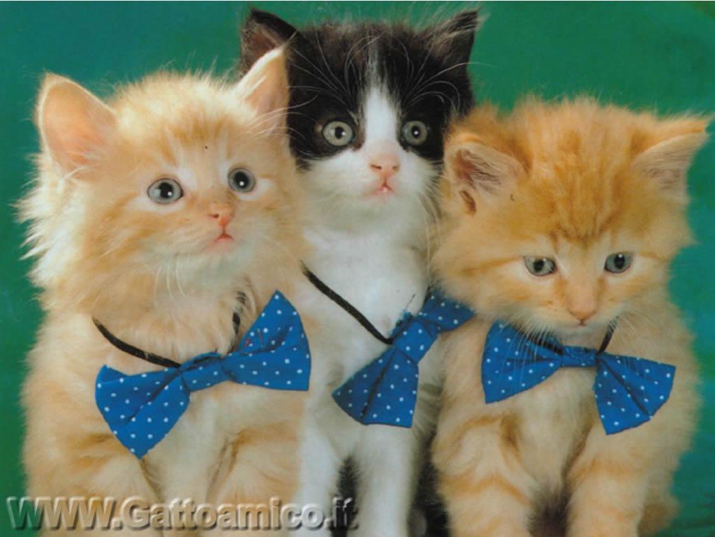 Sfondi gatti 16 for Sfondi gatti gratis