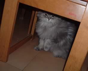 Luna la principessa - Tappeto sotto il tavolo ...