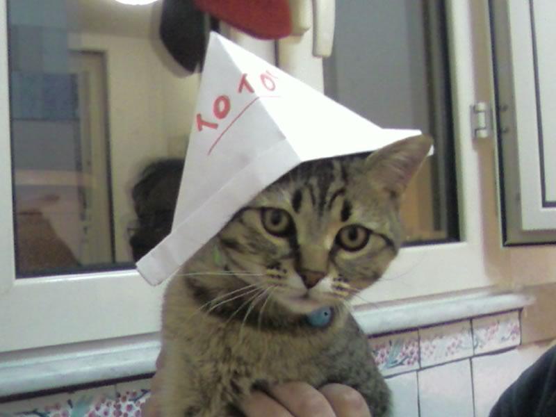 gatto con cappello