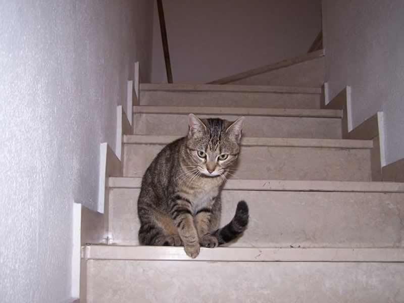 Foto di un gatto che sale le scale yahoo answers for Sedia elettrica che sale le scale