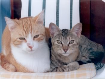 due gatti meravigliosi