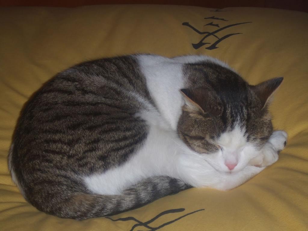 Billo il gattino sembra capire - Foto di donne sul letto ...