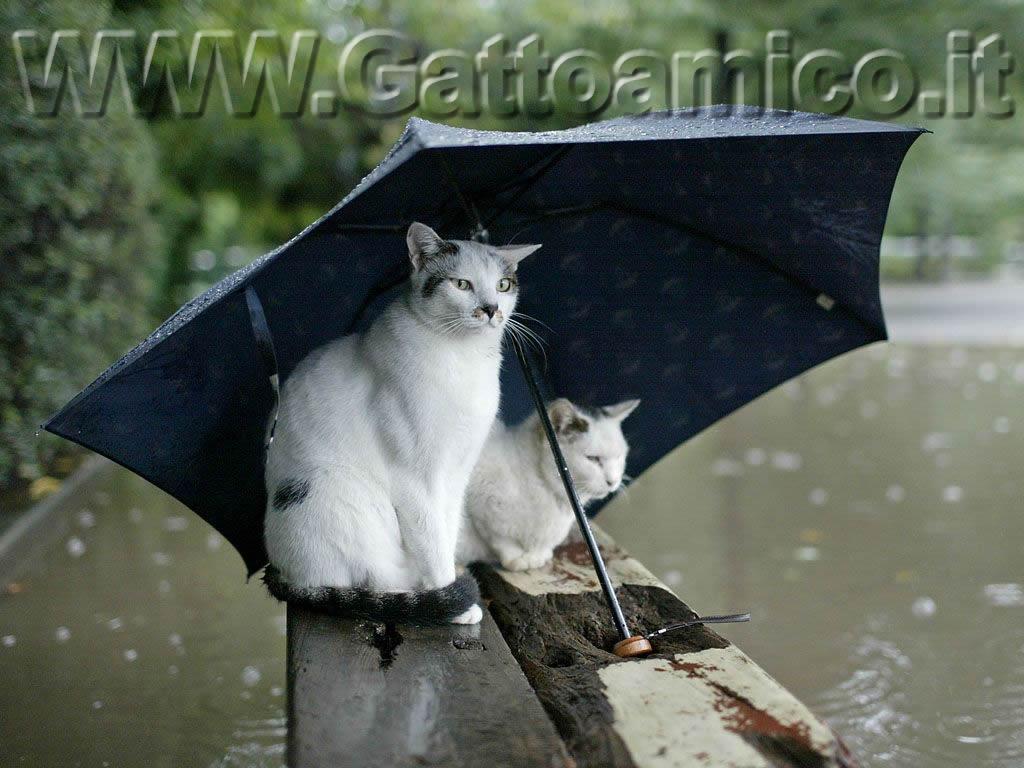 gatti sotto la pioggia foto particolari di gatti gattini bagnati