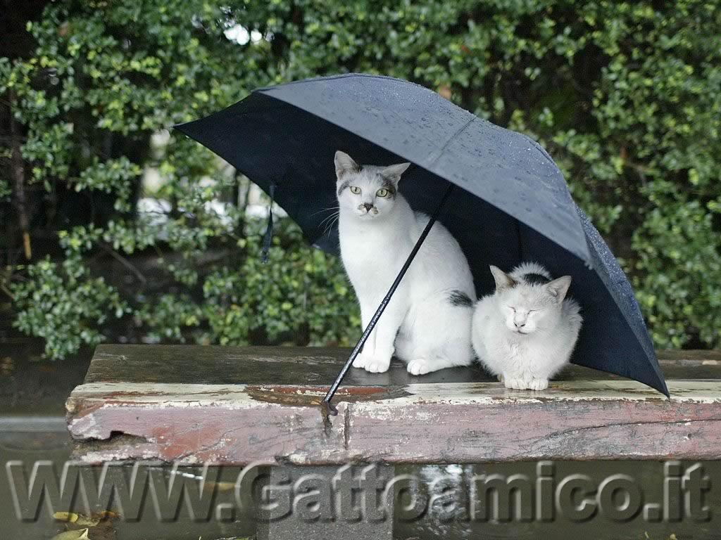 MARTEDI' 2 NOVEMBRE Due-micetti-sotto-la-pioggia-1024