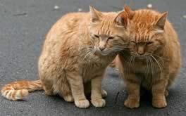 Fusa fra gatti