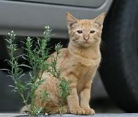 Al BAR del Regno - Pagina 2 Gatto_davanti_auto